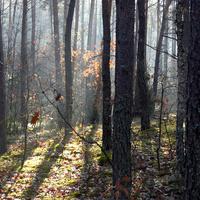 Jesień w lesie.