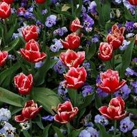Klomb kwiatowy w moim mieście