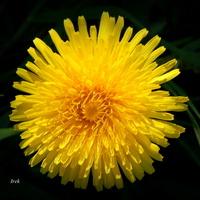 Kwiat o żółtej barwie
