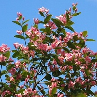 Kwitnący krzew