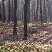 Las, zdjęcie zrobione pod słońce.
