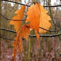 Liście po deszczu w lesie
