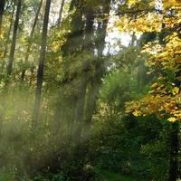 na dzień lasu