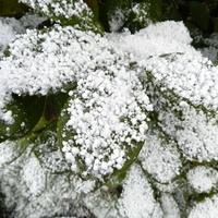 Dzisiaj padał śnieg