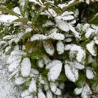Śnieg w ogrodzie