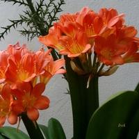 Pomarańczowe kwiaty.