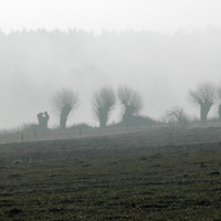 poranek na polu