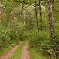 Przyjemny i zdrowy spacer wiosną w lesie