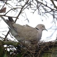 Ptaki też czują już wiosnę...