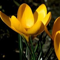 Radości Wiosny Naszym Panom,
