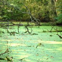 Staw rezerwat W Kampinoskim Parku Narodowym
