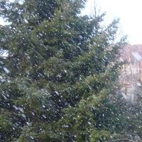 Sypnęło śniegiem! ;)