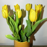 Tulipany żółte