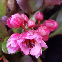 W ogrodniczym kwitną....