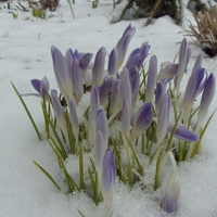 Wiosno, wiosno jak to tak....
