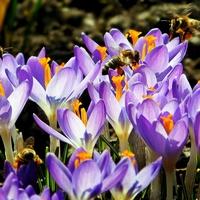 wysyp pszczółek