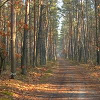 Zapraszam do lasu oczywiście w dzień
