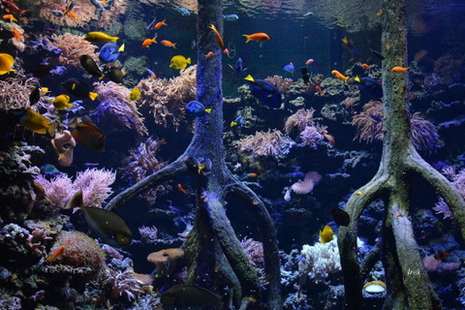 akwarium z rybkami.