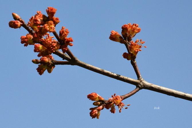 Dzisiejsza wiosna u mnie