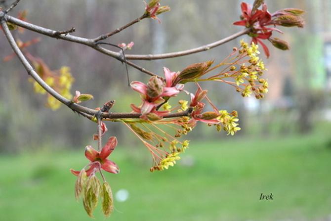 Kwiaty eleganckiego drzewa w parku