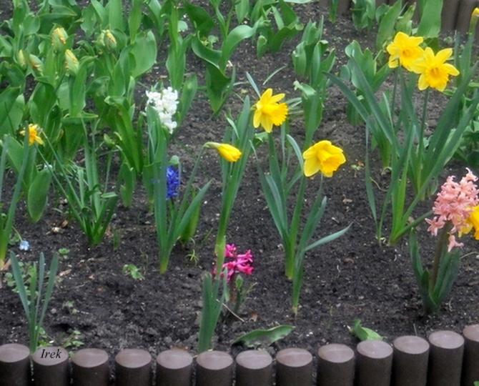 Mały ogródek przy bloku, fragment