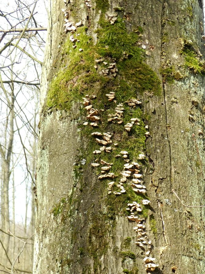 Na drzewie...