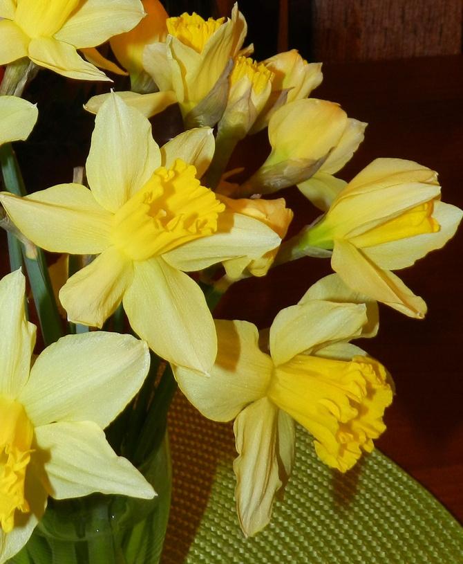 Narcyz-wiosenny kwiat