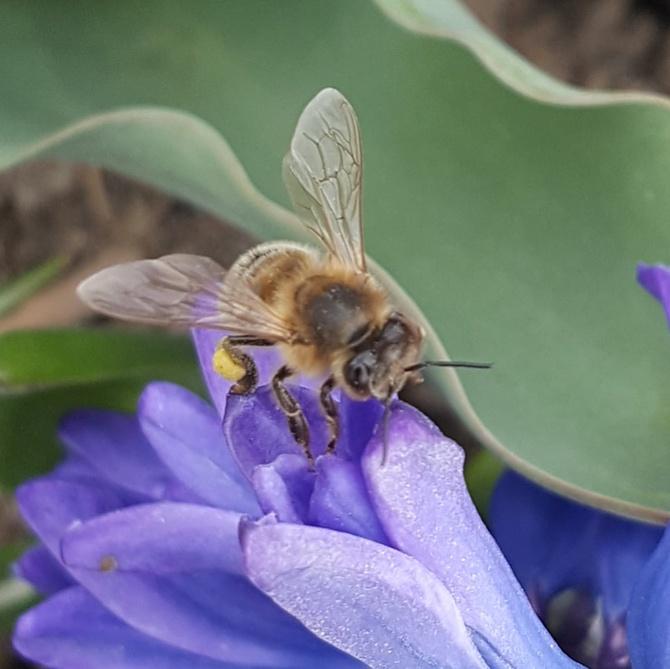 Pracowite pszczółki....