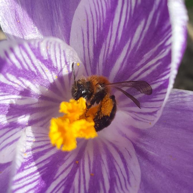 Pszczółka.....