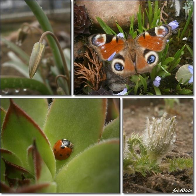 Raport z dzisiejszego ogrodu...