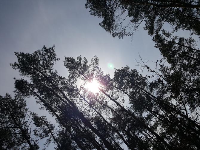 Słoneczko i wstrętny wiatr