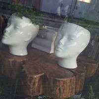 Co 2 głowy to nie jedna...