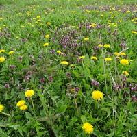 Łąki w kwiatach