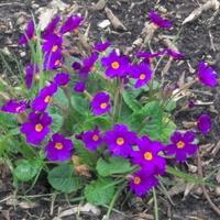 Kwiaty w ogródku szkolnym.