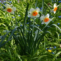 Kwiaty wielkanocne
