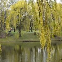 Kwietniowa zieleń w parku