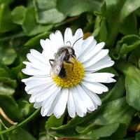 Malutka pszczółka....