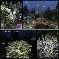 Pada śnieg, zima  wiosną