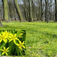 Park w złoci:-)