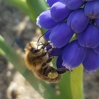 Pszczółka....