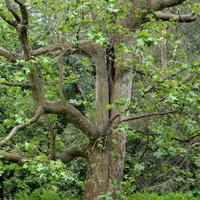Stare drzewo w parku