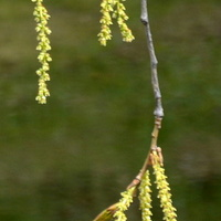 Wiosenne wisiorki