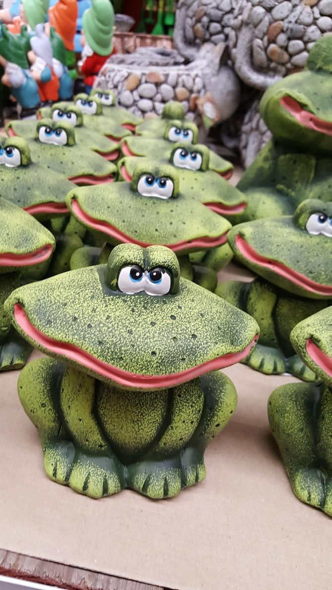 Żaby ogrodowe...
