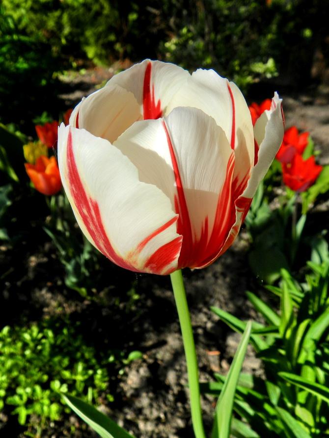 Biało-czerwony
