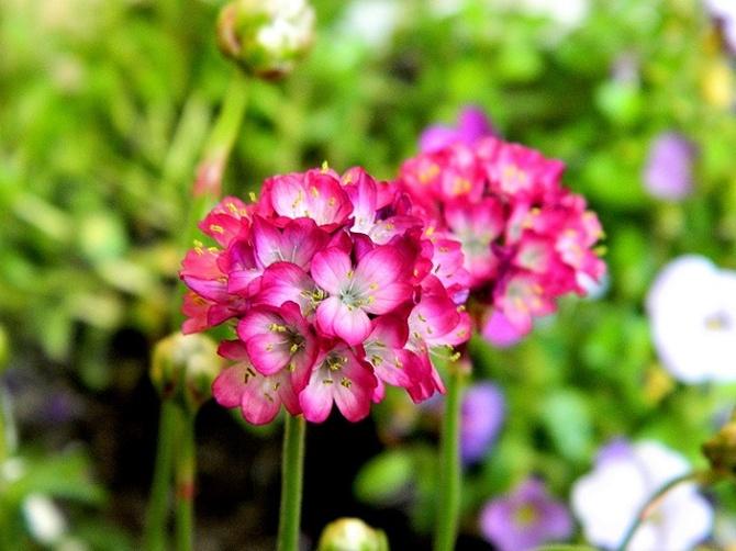 Całkiem rozwinięte kwiatki