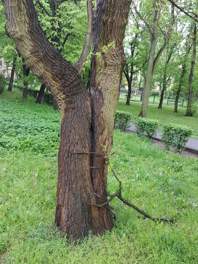 Drzewko....