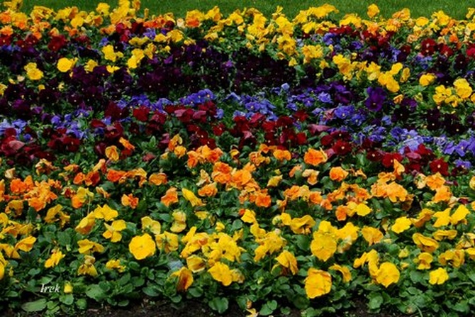 Dywanik kwiatkowy