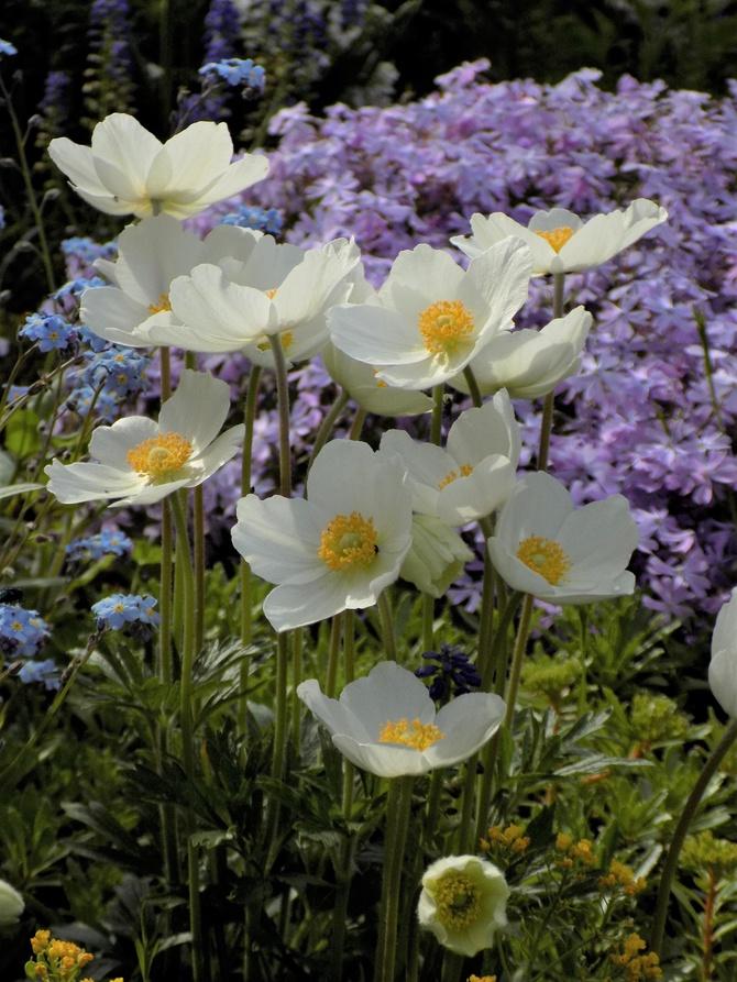 Góra kwiatów :)