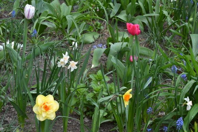 Kwiatki różne