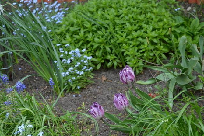 maleńki ogródek kwiatowy